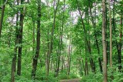 Трубетчино. Аллея в парке. Фото автора. 2002 г.