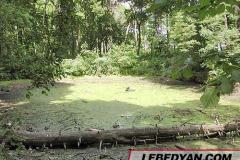 Трубетчино. Остатки пруда в усадебном парке. Фото автора. 2002 г.