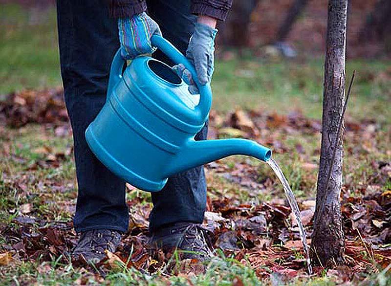 Уход за плодовыми деревьями и кустарниками