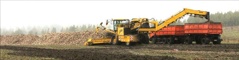 на полях лебедянского района завершается уборка свеклы