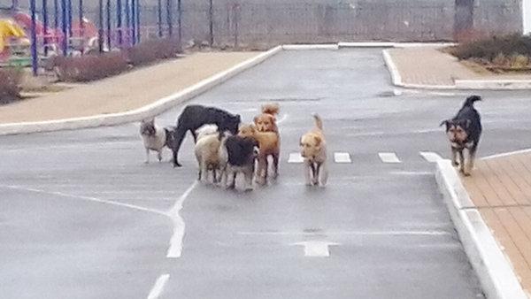 Бродячие собаки в Лебедяни облюбовали детский сад