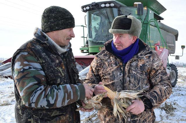 уборка кукурузы в марте