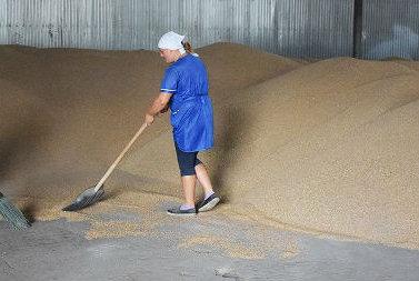 Уборка зерновых в ЗАО «Агрофирма «Русь»