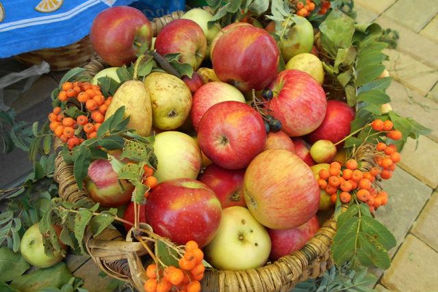Яблочный край, ягодный рай