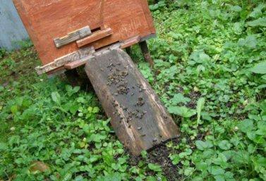 В Лебедянском районе гибнут пчелы