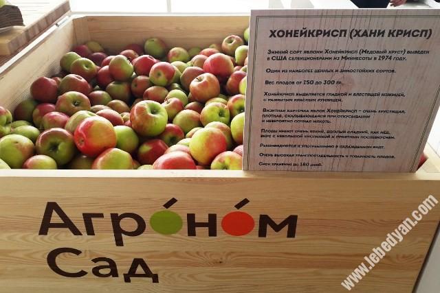 Открытие логистического комплекса ООО Агроном-сад