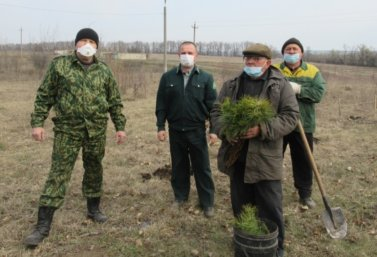 Владимир Жемчужников сажает Мемориальный лес