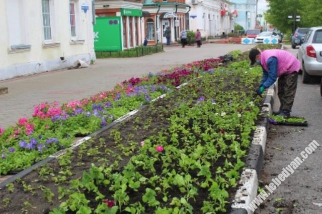 высадка цветочной рассады в Лебедяни