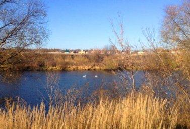 лебеди в Лебедяни (фото А. Коновалова)