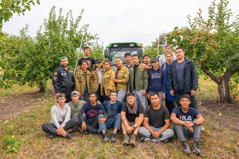 студенты Калмыцкого государственного университета на сборе яблок в ООО Агроном-сад